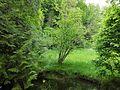 Grüne Schönheit.jpg