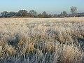 Grassland, Ewelme - geograph.org.uk - 1081985.jpg