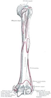 Lower extremity of humerus