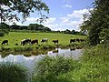 Grazing by the canal - geograph.org.uk - 842285.jpg