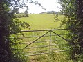 Grazing land near Collier's Brook - 2 - geograph.org.uk - 1412267.jpg