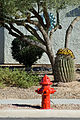 Green Valley fireplug.jpg