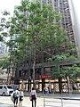 HK 中環 Central Ice House Street tree crown Saint George Building shops October 2020 SS2.jpg