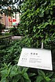 HK 紅磡 Hung Hum 香港理工大學 PolyU campus tree 九重葛屬 Bougainvillea green leaves n sign June 2017 IX1 02.jpg