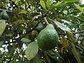 Hacienda Chorlavi pic. aa906350.jpg