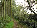 Hadrian's Wall Path in Stanley Plantation - geograph.org.uk - 269352.jpg