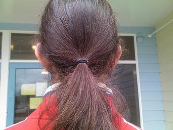 English: A male ponytail, affixed with a hair tie.