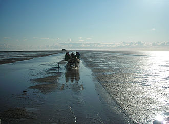 Nordfriesland (district) - Horsecart coming from a Hallig island in the mudflat at low tide