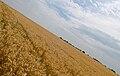 Harvest time in France (2746518298).jpg