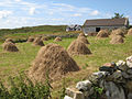 Hay cocks - geograph.org.uk - 1439469.jpg