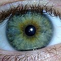 Hazel Eyes Iris closeup, Caucasian male, age 23.jpg