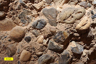 Cobble (geology) - Sandy conglomerate with cobbles in the Hazeva Formation (Miocene) of southern Israel