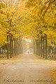 Herbst (235177643).jpeg