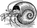 Hermitcrab2 (PSF).png
