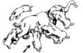 Homotherium shearing bite grouping.PNG