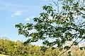 Horn-Bad Meinberg - 2015-05-04 - LIP-004 Naptetal (46).jpg