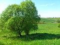 Horodots'kyi district, Lviv Oblast, Ukraine - panoramio (88).jpg