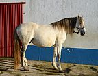 Horse December 2014-3.jpg