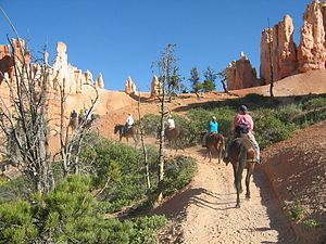 Horseriders in Bryce Canyon-NPS photo.jpg