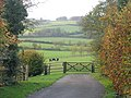 Horses in a field - geograph.org.uk - 88238.jpg