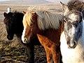 Horses of three color flavors (3004576849).jpg