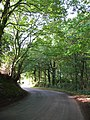 Hunsterson Road, Chapel Wood.jpg