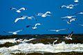 IJmuiden-beach-2013-29 (9043410987).jpg