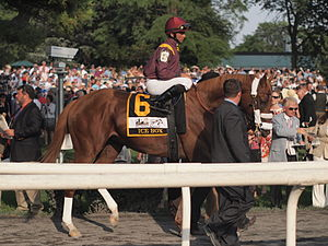 Ice Box (horse) - Image: Ice Box at 2010 Belmont Stakes