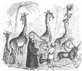 Illustrirte Zeitung (1843) 10 154 1 Die Giraffen und Antilopen mit ihren nubischen Wärtern in London.PNG
