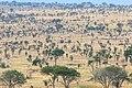 Impressions of Serengeti (110).jpg