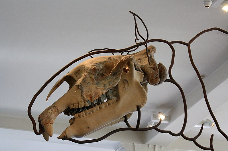 File:In the American Museum of Natural History.jpg