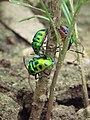 Insect2-angul Odisha.jpg