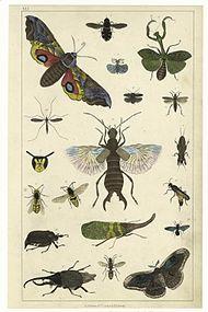 svenske insekter