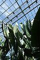 Inside the greenhouse @ Parc Zoologique de Paris (Zoo) @ Paris (26253849462).jpg