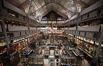 Pitt Rivers Museum - Pitt Rivers Museum interior, 2015