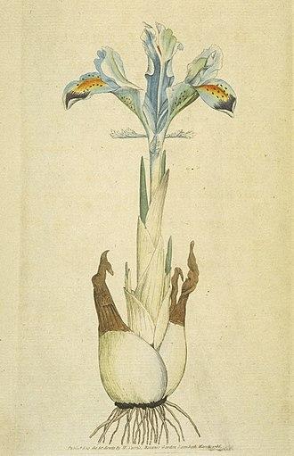 Curtis's Botanical Magazine - Image: Iris persica (Sowerby)