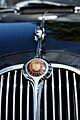 Jaguar (9604378354).jpg