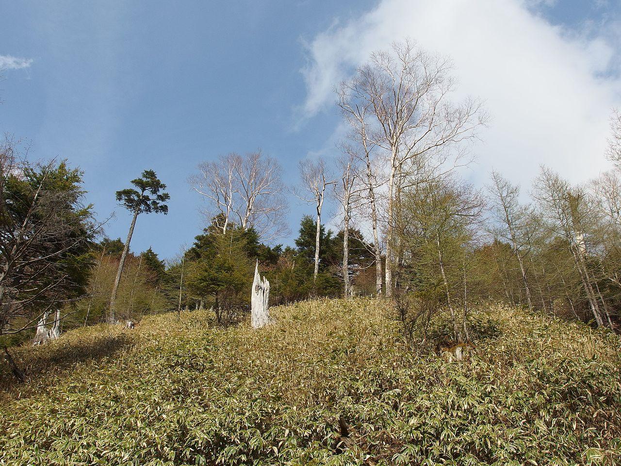 File:Car cable at Mount Hakone, Hakone, Kanagawa