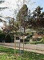 Jardin Dominique-Chavoix Suresnes - Lions Club 1.jpg