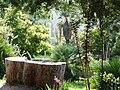Jardin d'Australie, tronc d'eucalyptus - Domaine du Rayol.jpg