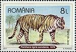 Javan-Tiger-Panthera-tigris-sondaica.jpg