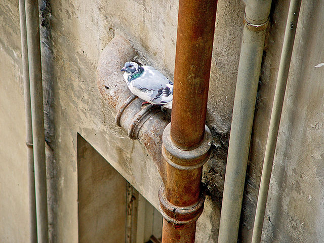 External pipes are at most risk of freezing during the winter