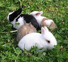 Les tests sur les animaux sont-ils interdits en Europe