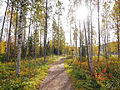 Jyväskylä - path.jpg