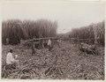 KITLV - 30190 - Kurkdjian, N.V. Photografisch Atelier - Soerabaja - Sugar plantation in East Java - 1921.tif