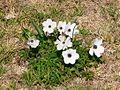 Kalanit-white001 ST.jpg