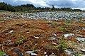 Karmøy 05.2010 - panoramio (4).jpg