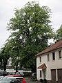 Kassel 611.019.jpg