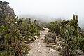 Kilimanjaro vegetation.jpg