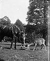 Kilternan Abbey - Golden Ball - Ireland 11 (Horse, Deer Kilternan Abbey).jpg